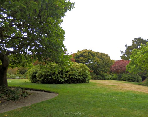 Rhododendron Dell