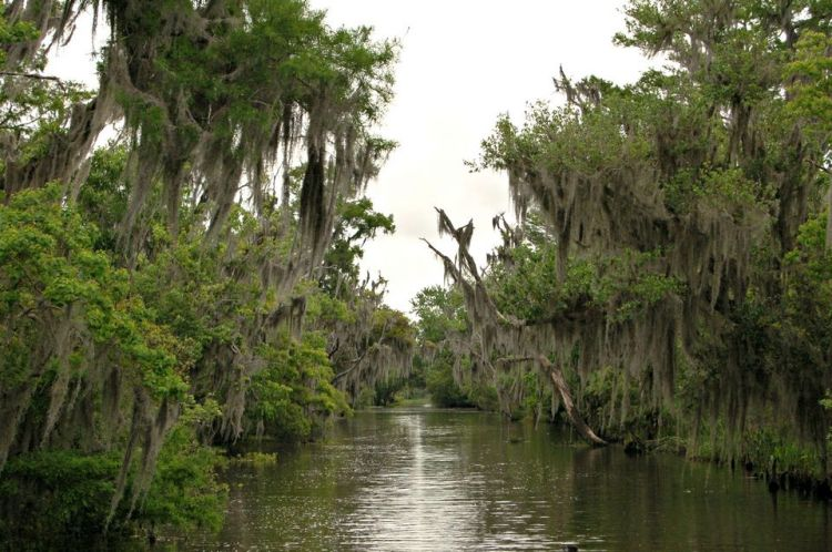 hanging moss, swamp tour, Lafitte, Louisiana, April 2015, ©2015 ImagesByRJM