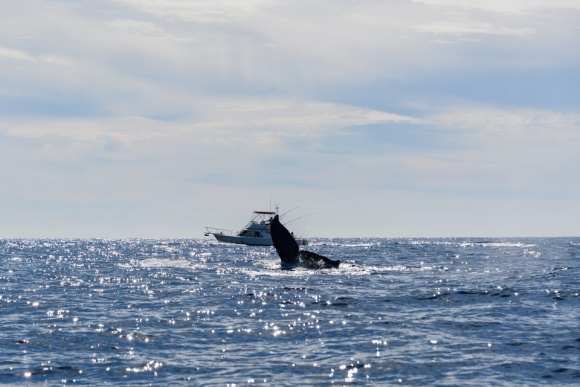 Cabo San Lucas | Baja Mexico | Christmas | Resort | whale watching | fishing