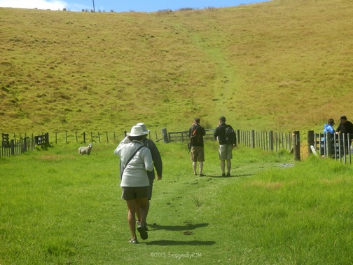 We had to cut through the sheep pasture to get to the path uphill.
