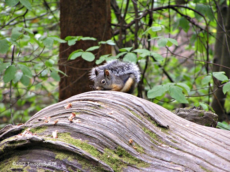 Calaveras Bit Trees State Park