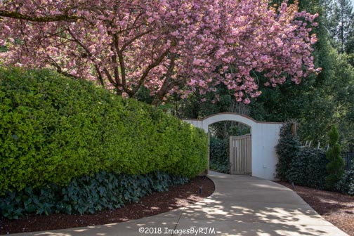 Crystal Hermitage | Ananda Village | Nevada City | Northern California | gardens | tulips | cherry blossoms | gate