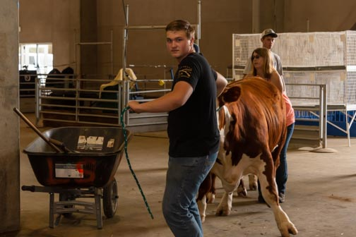 California State Fair | Don't Miss A Moment | Livestock | Bull | Agriculture | Sacramento | Images By RJM
