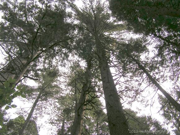Calaveras Big Trees State Park, 9-23-12