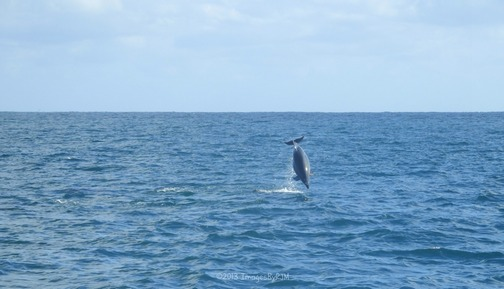 Bay of Islands, New Zealand 2-6-13OLYMPUS DIGITAL CAMERA