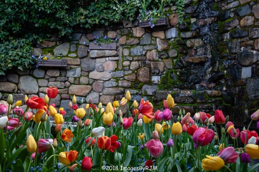 Water cascading down a rock wall at Crystal Hermitage, with many colorful tulips in the foreground.