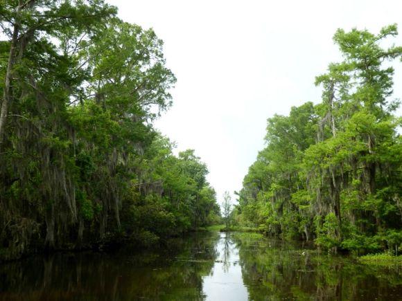 swamp tour, Lafitte, Louisiana, April 2015, ©2015 ImagesByRJM