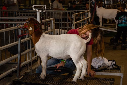 California State Fair | Don't Miss A Moment | Livestock | Goat | Agriculture | Sacramento | Images By RJM