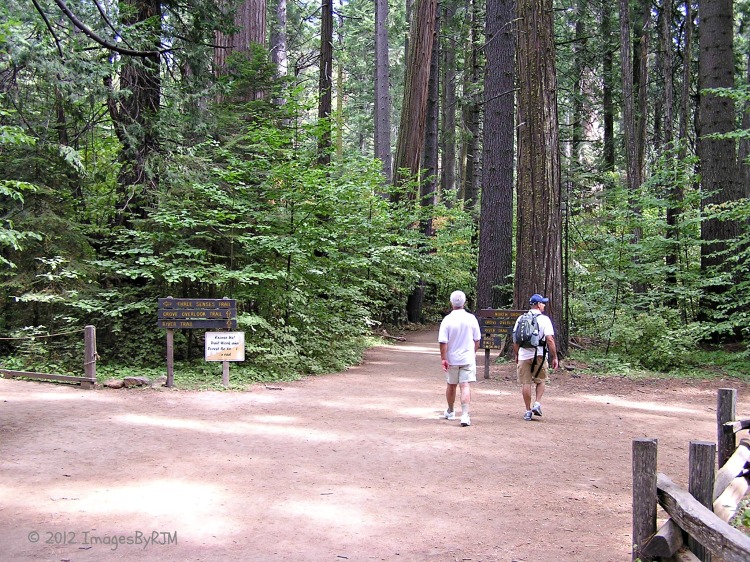 Calaveras Big Trees State Park 9-23-12