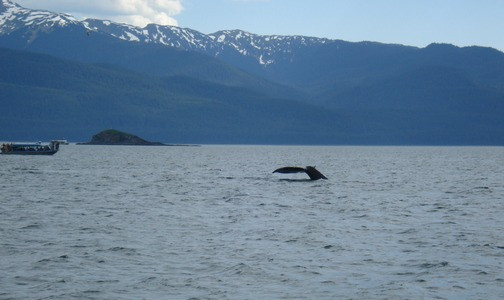 Whale tail!