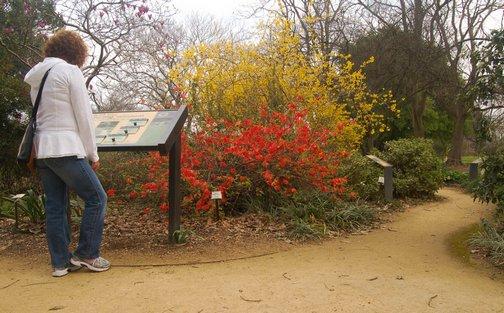 accessibility, arboretum, garden, nature, outdoors, spring, wheelchair accessible, Storer Garden