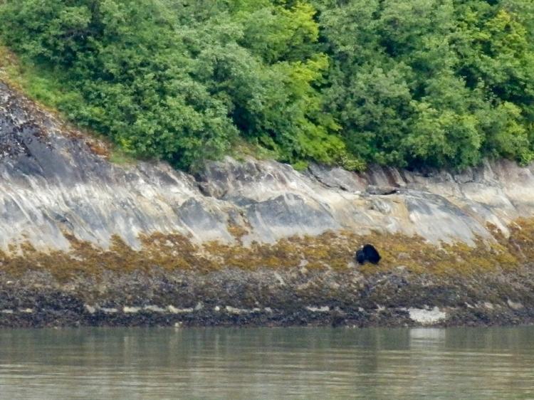 Tracy Arm Fjord | Alaska | glacier | travel | nature | Alaskan cruise | May 2016 | Brent Nixon | glacial ice | black bear | ©2016 ImagesByRJM
