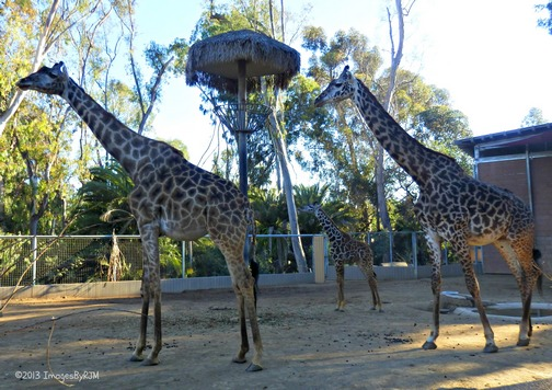 Anything Is Possible Travel - Let's Go to the San Diego Zoo!