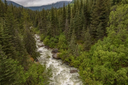 White water river flowing in heavily forested landscape.