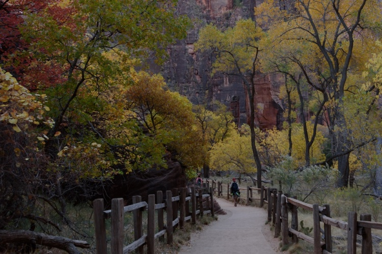 Zion National Park | Utah | Riverside Walk | Wheelchair Accessible | Nature | Landscape | Canyon | October 2017 | Images by RJM