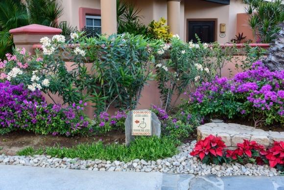 Cabo San Lucas | Baja Mexico | Christmas | Resort | Hacienda Del Mar | Sheraton Grand Los Cabos | wheelchair accessible