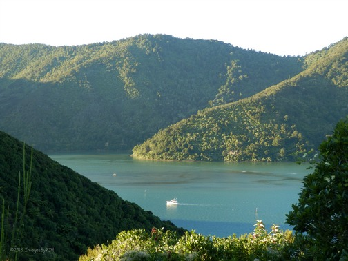 Queen Charlotte Sound, South Island, New Zealand (Feb. 2013)