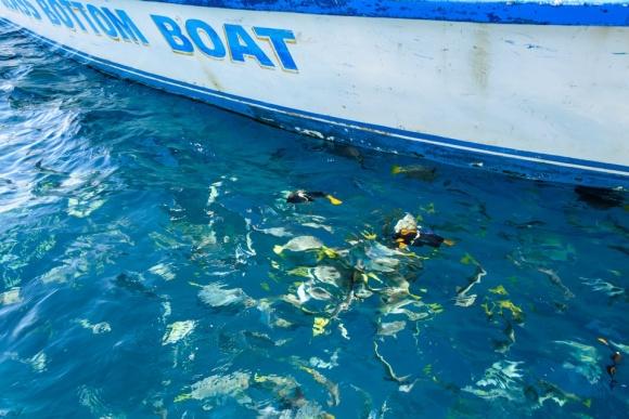 Cabo San Lucas | Baja Mexico | Christmas | Resort | glass bottom boat