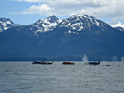 One of the highlights was a whale-watching excursion, where more than a dozen humpback whales delighted the onlookers!