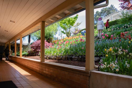 Crystal Hermitage | Ananda Village | Nevada City | Northern California | gardens | tulips | wheelchair accessible | garden terrace | breezeway