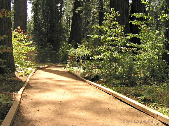 Accessible path, North Grove Trail