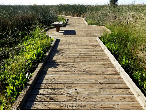Anything Is Possible Travel - Consumnes River Preserve